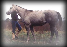 click for Breezy Blue Hancocks pedigree