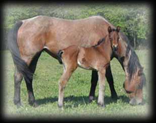 Click for Bros Roan's pedigree